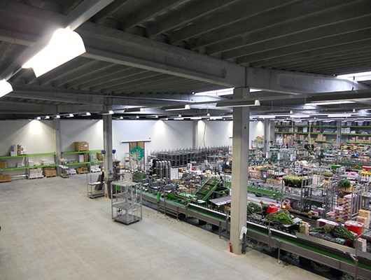 Bouquetnet Celieplant - Aalsmeer